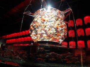 巨大金魚鉢
